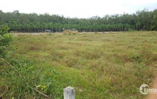 Bán gấp lô đất MT 62m, nở hậu, SH chính chủ, giá ưu đãi, Chợ Cầu Xe,Trảng Bàng,Tây Ninh.
