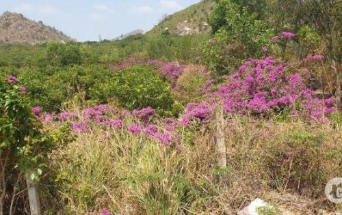 bán 500m2 đất vườn, gần ngay KDL núi dinh, có sẵn vườn cây, ao cá, cổng rào, nền nhà, thiết kế hiện đại, sổ hồng công chứng, liên hệ: 0896639466