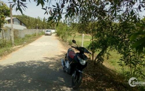 Chính chủ cần bán lô đất  xã Thái Mỹ. 500m2 đất trồng cây lâu năm