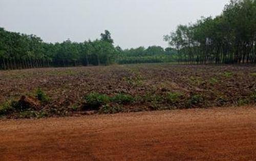 Vành đai Becamex Bình Phước 450tr/500m2 (10x50). 100TC,SHR.LH: 0935.611.956