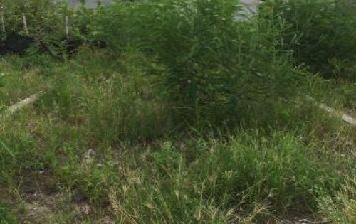 gia đình tôi cần bán lô đất ở khu 31ha Trâu Quỳ  dt 125m2 mt 7,13m , kinh doanh thuận lợi