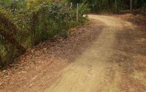 Đất vườn Phú Hòa Đông 3400m2 đường xe tải chạy 40x85