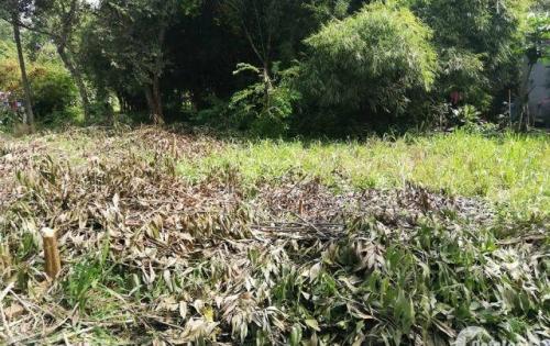 bán đất thổ cư giá rẻ gần trung tâm trảng bàng tây ninh