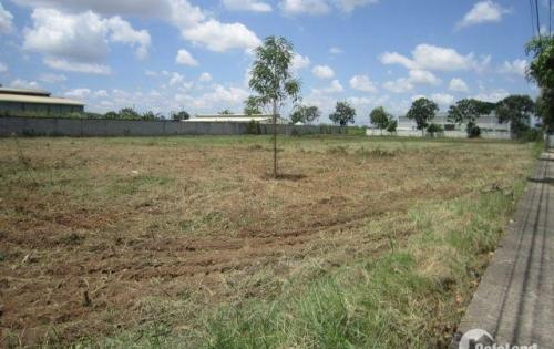 Cho thuê đất trong khu công nghiệp