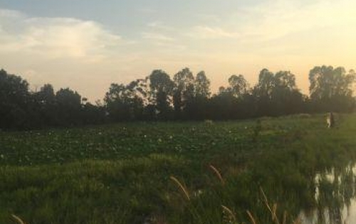 Bán 1900m2 Đất Vườn Đã phân Thành 3 Lô Mặt Tiền Ngay Cầu Cây Xanh  Bình Mỹ